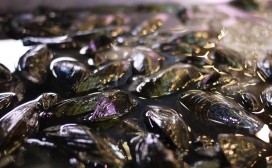 Mussels from Domenic's